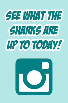 follow cheer sport sharks on instagram